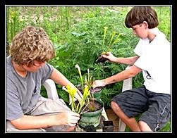 planting carnivorous plants